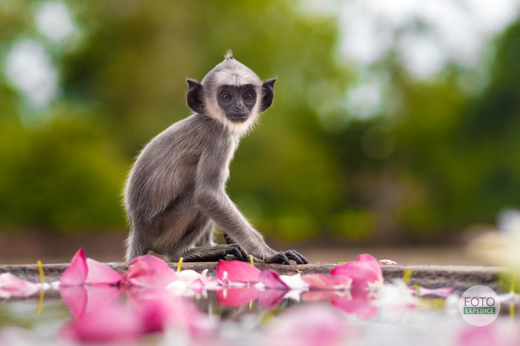 Fotoexpedice Srí Lanka Martin Kamín